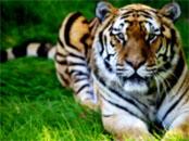 safari-great-britan-5