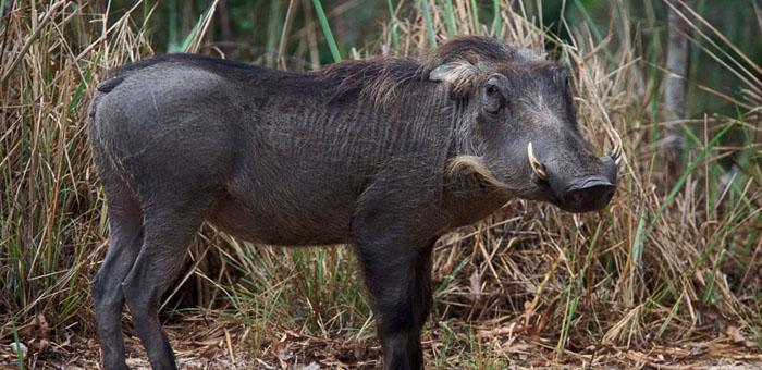 национальный парк махали