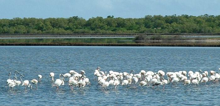 национальный парк саадани