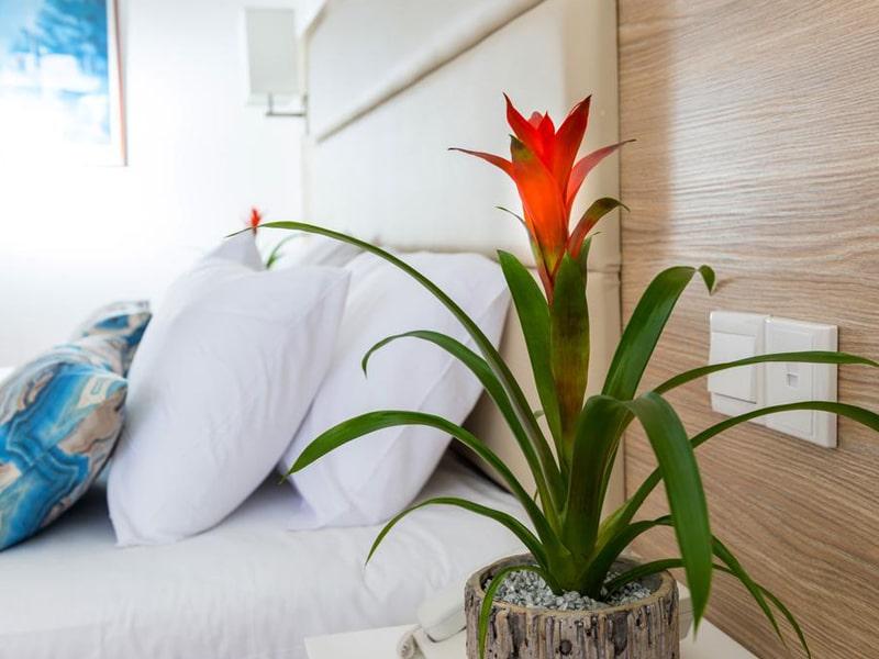 Ascos Coral Beach Hotel (5)