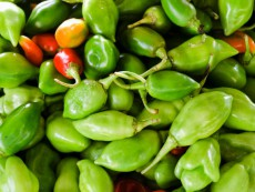 Pile of fresh chilli peppers from Martinique (top view)