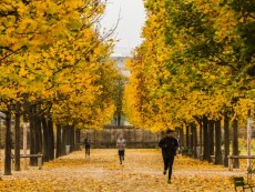 Jogging in the Jardin (Garden) des Tuileries in autumn (fall)
