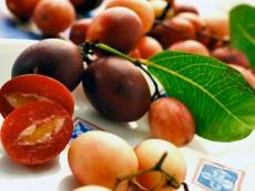 Karonda fruits (carissa carandas)