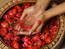 Woman cupping rose petals and rose water