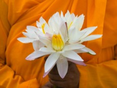 Monk holding a white lotus flower, Sri Lanka
